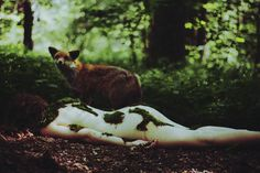 laura makabresku: it is the fox who cares about girl's soul. she died in the woods and now her flesh is overgrown by moss.