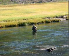 Fly fishing; Madison River, Yellowstone National Park, Wyoming
