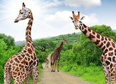 paisajes bloemfontein - Buscar con Google