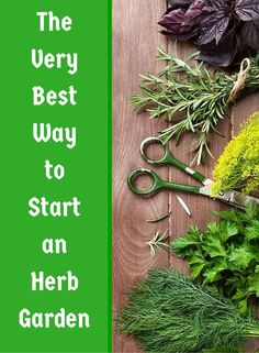 Wouldn't it be nice if you could just grab some fresh herbs right out of your own herb garden? Well, it's really easy! Here, we show you how you can grow your own herbs to add to any healthy recipe!