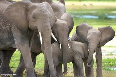 Prince William Hits the Mark on Ivory Trade http://www.awf.org/news/prince-william-hits-mark-ivory-trade