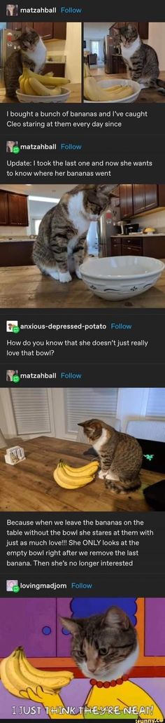 Cat Memes, Funny Memes, Funny Shit, Funny Stuff, What Cat, Forbidden Love, Fandom Memes, Wholesome Memes, Then And Now