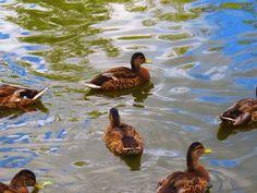 Kennedy park ( Frederikshavn Danmark Bird, Animals, Animales, Animaux, Birds, Animal, Animais