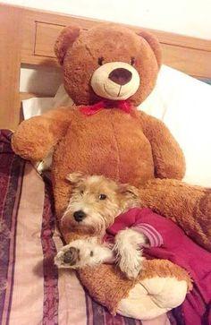 I love my bear...