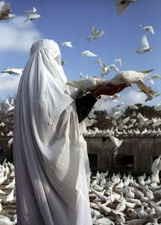 A woman in a white burqa feeds pigeons after paying respect to Imam Ali at his resting place in Mazar-i-Sharif, Afghanistan. Muslim Couples, Muslim Women, People Around The World, Around The Worlds, Cool Pictures, Cool Photos, Islamic Girl, Bagdad, World Peace