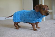 Sweater Pattern for Mini Daschaunds Doxie Dachshund by CraftyMJC