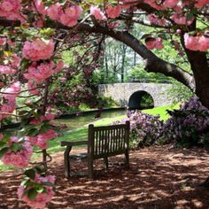 Botanical Gardens, we called it the Azalea Gardens when I was young. Norfolk, Va.