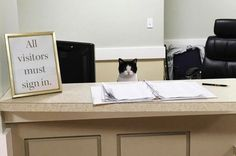 Oreo the cat was just like any stray cat out there: trying to make a living on the streets and minding her own business, until one day she walked into a nursing home and decided