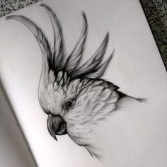 Detailed black and white animal drawings - parrot cockatoo. - Detailed black and white animal drawings – parrot cockatoo. Detailed black and white animal drawi - Pencil Drawings Of Animals, Animal Sketches, Art Drawings Sketches, Bird Drawings, Sketches Of Birds, Amazing Pencil Drawings, Drawing Birds, Draw Animals, Nature Drawing