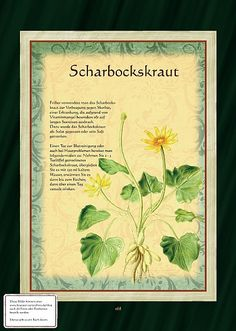 Scharbockskraut Source by DaPeti Healing Herbs, Medicinal Plants, Natural Medicine, Herbal Medicine, Aquaponics Kit, Backyard Aquaponics, All About Plants, Border Plants, Greenhouse Gardening