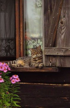 Lazy Afternoon ~ Tabby Cat rests on a Window Ledge . I Love Cats, Big Cats, Crazy Cats, Cats And Kittens, Cute Cats, Funny Cats, Tabby Cats, Pretty Cats, Beautiful Cats