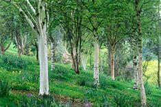 Les bouleaux réputés pour leurs écorces décoratives et sont aussi beaux en massifs qu'en haie, dans un grand comme dans un petit jardin. Voici comment les planter et les entretenir.