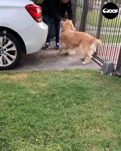 Cute Funny Dogs, Funny Cats And Dogs, Cute Funny Animals, Cute Baby Animals, Animals And Pets, Wild Animals, Funny Animal Photos, Cute Animal Videos, Cute Puppies