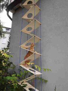 Conquiste um gatinho!: A Escada Dobrável Gato!?