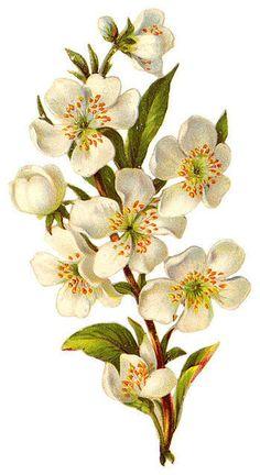 Flowers441