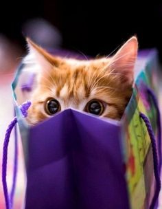 "renardiere: "" Kitten In The Shopping Bag… """