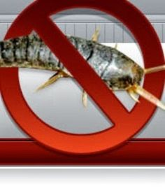 Despite their aquatic-sounding name, silverfish are insects that are hard to eliminate with simple pest control techniques once they make your home their own. Pest prevention is the key to protecting your books and paper products from silverfish. Bug Control, Pest Control, House Insects, Control Techniques, Types Of Bugs, Silverfish, Stink Bugs, Pest Management, Garden Guide