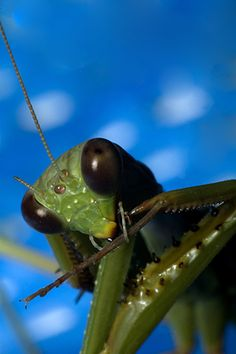Insect close up