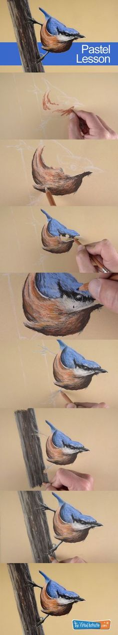 How to draw a bird with pastels. #bird #pastels #drawing
