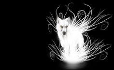 Epic Wolf Wallpaper Related Keywords & Suggestions - Epic Wolf ...