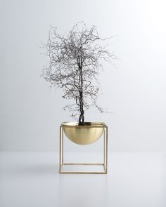 Une plante originale | architecture d'intérieur, design, home decor, interior design. Plus d'inspirations sur http://www.bocadolobo.com/en/inspiration-and-ideas/