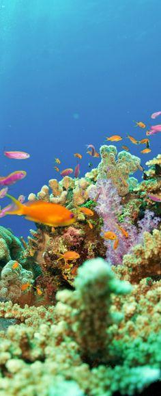 Get your #snorkel on in #Fiji.