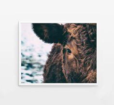 Cow printable poster. Catle poster. Catle printable. por Byoliart