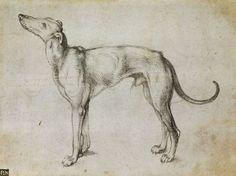 Albrecht Dürer (1471-1528) More