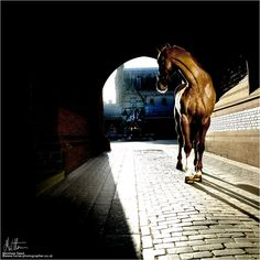Gallery | The Horse Photographer