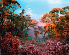 Richard Moss photography