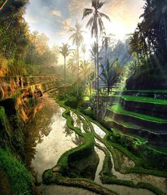 Beautiful colours in Ubud,Bali Indonesia! Places To Travel, Places To See, Travel Destinations, Travel Tips, Travel Ideas, Ubud Bali, Ubud Indonesia, Wonderful Places, Beautiful Places