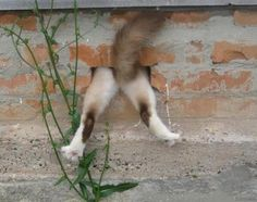 cat butt in a brick wall