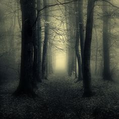 hauntingly peaceful and beautiful black and white photo of a path in the woods. old trees in a foggy forest.not sure of the photographer. All Nature, Nature Quotes, Forest Quotes, Nature Gif, Stunning Photography, Landscape Photography, Nature Photography, Gothic Photography, Beau Message