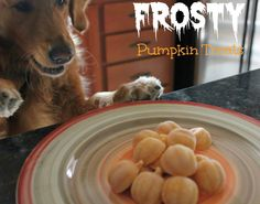 Miley's Daily Scoop: Frosty Pumpkin Dog Treats