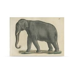 John Derian Company Inc. Elephant postcard set with envelope (600 MXN) ❤ liked on Polyvore featuring home, home decor and stationery
