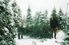 McGee's Christmas Tree Farm, 3131 Carson Road Placerville, CA Season: Open Daily Starting Friday after Thanksgiving