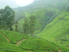 Nuwara Eliya: Sri Lanka's hill resort perched at over 6000 feet.