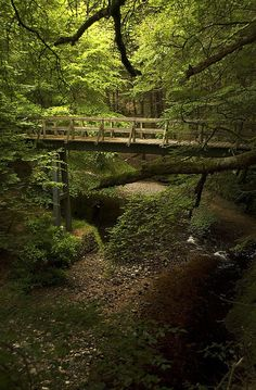 Forest bridge, Cawdor Castle, Cawdor, the Highlands, Scotland