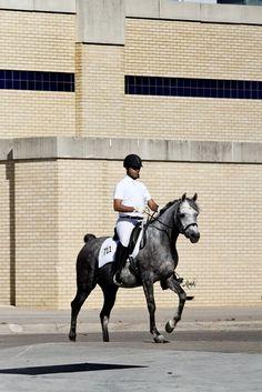 Amal Magidaa LDA (Mishaal HP x Illa Magidaa LDA, grey champion Egyptian Arabian mare, 2013 Cowtown Classic