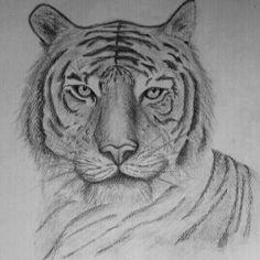 Tigre - matita su cartoncino