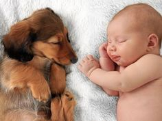 Photo about Newborn baby girl and dachshund puppy asleep on a white blanket. Image of buddies, newborn, dachshund - 57463675 Baby Puppies, Baby Dogs, Dachshund, How To Introduce Cats, Puppy Teething, Popular Baby Names, Dog Photos, Animals For Kids, Baby Girl Newborn
