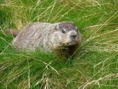 Prognostications Brown Bear, Lord, Animals, Animales, Animaux, Animal, Animais