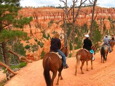 Horse riding in Bryce Canyon National Park. For more stunning photos of Bryce Canyon click link: http://www.ytravelblog.com/12-photos-of-bryce-canyon-np/ #travel
