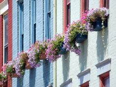 Google Image Result for http://img.ehowcdn.com/article-new/ehow/images/a07/j9/hm/plants-flowers-window-boxes-800x800.jpg