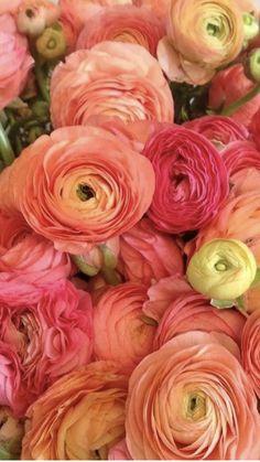 Rose Like Flowers, Flowers For Sale, Burgundy Flowers, Birth Flowers, Types Of Flowers, Ranunculus Wedding Bouquet, Ranunculus Flowers, Wedding Flowers, Peonies