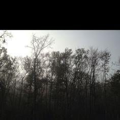 Foggy day...foggy brain. Don't let it get u. Clear yr mind,take a deep breath,shake yr body n GO!