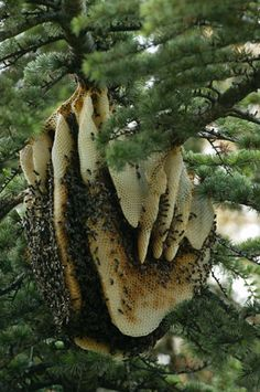 honeycomb of bees