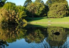 Wonderful Photos Botanical Gardens melbourne Style Vince plus My partner and i celebrated the 4 twelve months anniversary by paying the time in the Huntington, i. Melbourne Garden, Visit Melbourne, Royal Garden, Garden S, Days Of The Year, Where To Go, Botanical Gardens, Melbourne Victoria, Victoria Australia