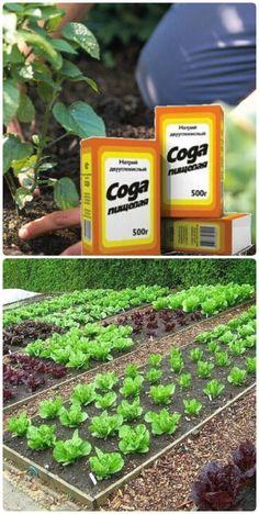 Decoration, Landscape, Flowers, Plants, Outdoor, Gardens, Easel, Sodas, Potager Garden