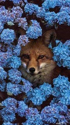 Wild Animals Photos, Animals And Pets, Funny Animals, Nature Animals, Blog Wallpaper, Animal Wallpaper, Beautiful Creatures, Animals Beautiful, Pretty Animals